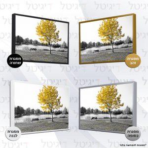 העץ הצהוב מסגרות