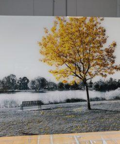 תמונות זכוכית ענקית - עץ הצהוב שחור לבן לקוח מרוצה