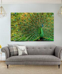תמונת קנבס הטווס הפרוס לסלון לעיצוב הבית