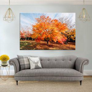 תמונת קנבס עץ יפני כתום לסלון לעיצוב הבית