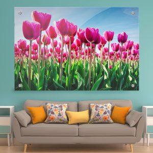 תמונת זכוכית - פרחי הצבעוני הוורד לעיצוב הבית על קיר בסלון
