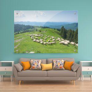 תמונת זכוכית - כבשים לבנות של הרי הקרפטים לעיצוב הבית על קיר בסלון