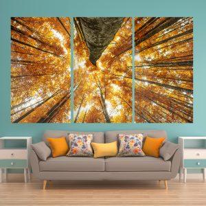 תמונות זכוכית עצי אשור צהובים