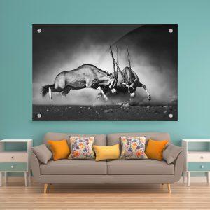 תמונת זכוכית קרב אנטילופות לעיצוב הבית על קיר בסלון