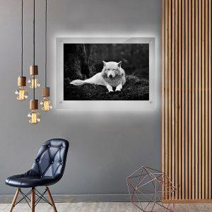 לייטבוקס תמונה מוארת - הזאב הלבן לעיצוב הבית