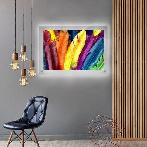 לייטבוקס תמונה מוארת - נוצות צבעוניות לעיצוב הבית